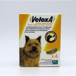 Veloxa  - 4 comprimés sécables pour chiens - arôme boeuf disponible sur Pharmacasse